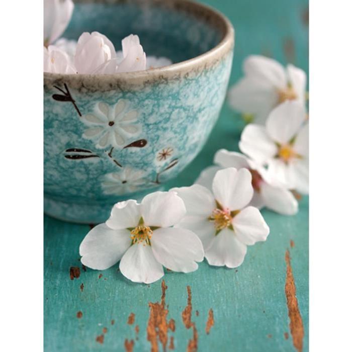 Affiche papier -  Fleurs de cerisiers  - Fox  -  30x40 cm